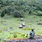 Экстремалы на джипах прошли маршрут по прителецкой тайге (фото и видео)
