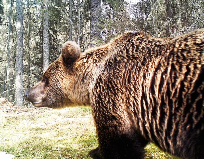 только животный мир алтая картинки система специальных наименований
