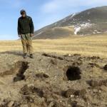 На Алтае обнаружен подвид медведя, который считался вымершим (фото)
