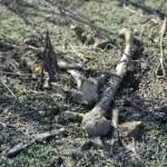 Полиция проводит проверку информации о разрушении древнего могильника около Маймы (фото)