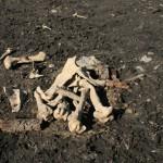 Курган знатной девушки нашли в Барагаше во время строительства водопровода (фото)