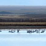 В Кош-Агачском районе пересчитали птиц