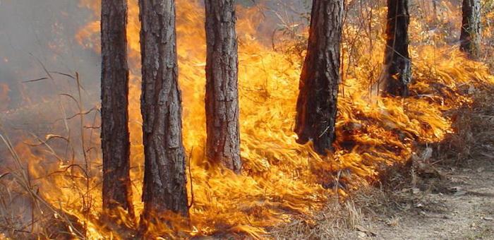Лесные пожары принесли Горному Алтаю более 180 млн рублей ущерба