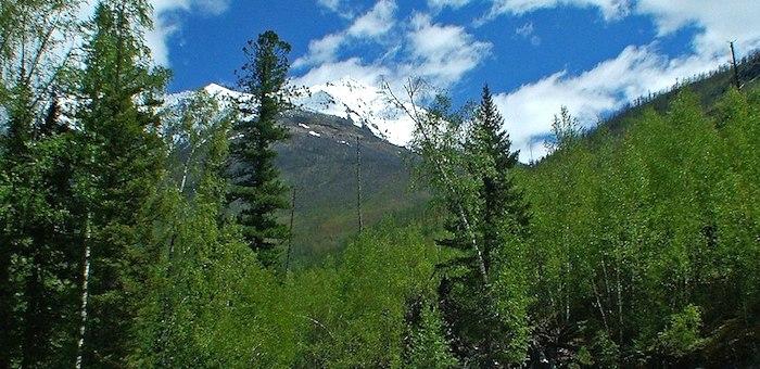Первое масштабное исследование лесов завершается в Катунском заповеднике