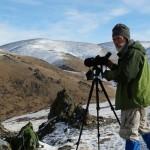 На хребте Чихачева насчитали 326 архаров и нашли новых снежных барсов (фото)