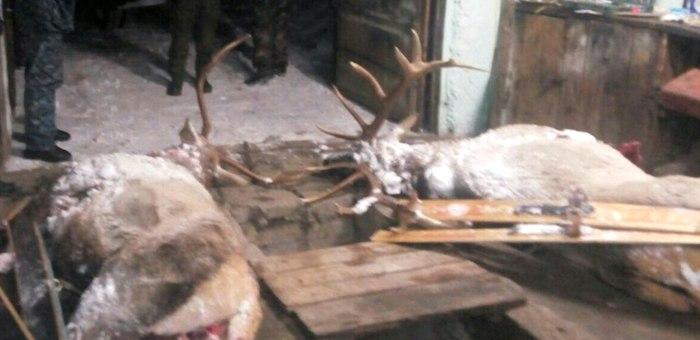 Эколог-браконьер с приятелем застрелил двух маралов в Усть-Коксинском районе (фото)
