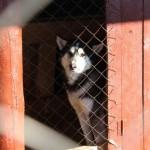 В Горно-Алтайске заработал питомник для содержания бездомных собак (фото)