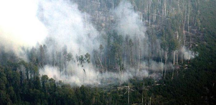 Первый в этом году лесной пожар произошел на Алтае
