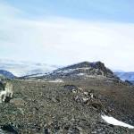 Уникальные видеокадры с маленьким снежным барсом обнародовали алтайские экологи