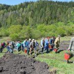День посадки леса прошел в Горном Алтае (фото)