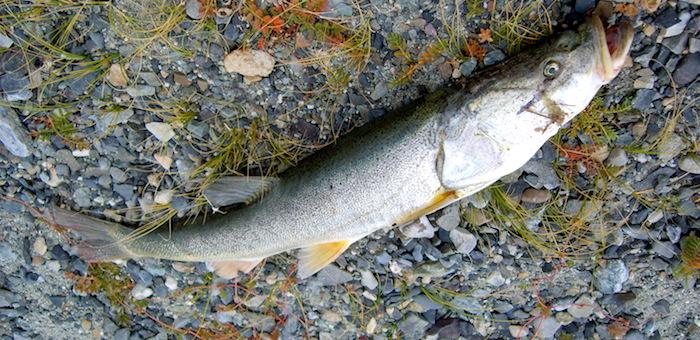 Рыба приморского края фото и название это