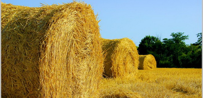 В правительстве обсудили заготовку кормов
