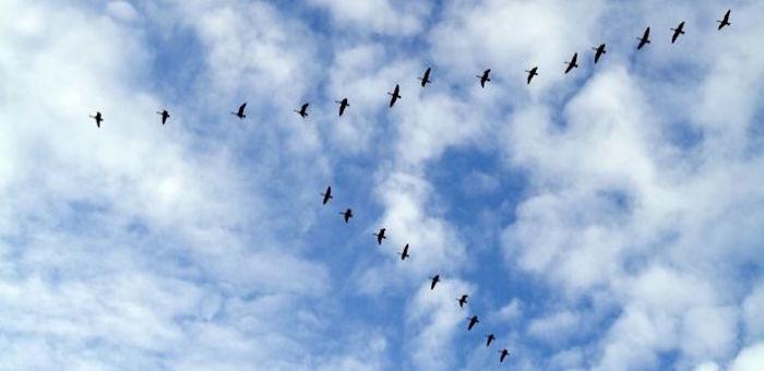 В Кош-Агаче проводили на юг перелетных птиц