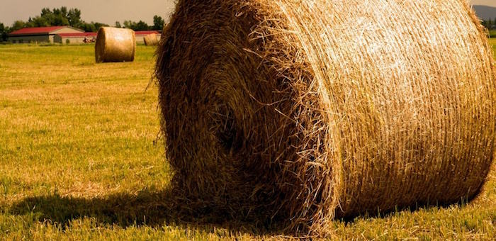 Фермера накажут за перевозку сена в Республику Алтай
