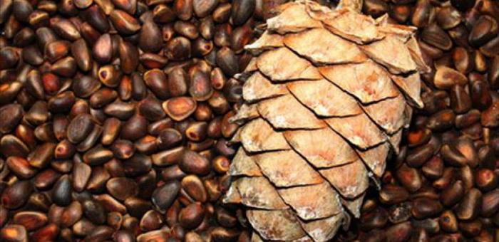 Более 9 тонн кедрового ореха утащили со склада в Майме