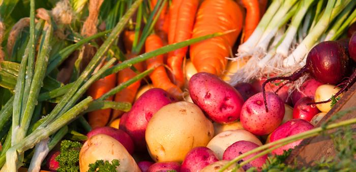 280 тонн овощей вырастили школьники в Республике Алтай