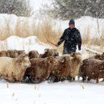 Фотофакт: Китайский Алтай тоже завалило снегом