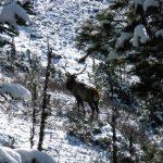 Зимние учеты начались в Алтайском заповеднике