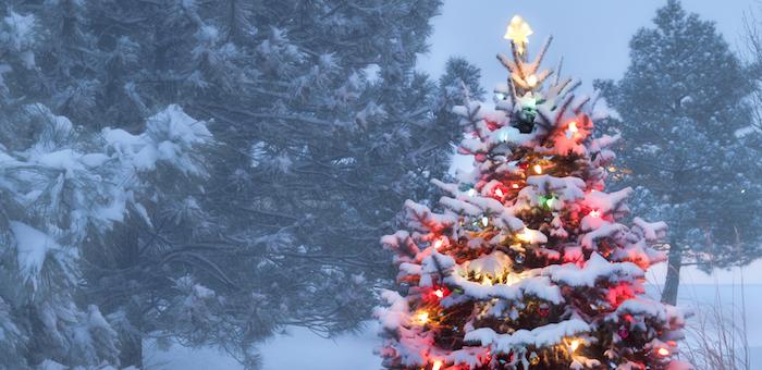 В Горно-Алтайске открылись 17 елочных базаров