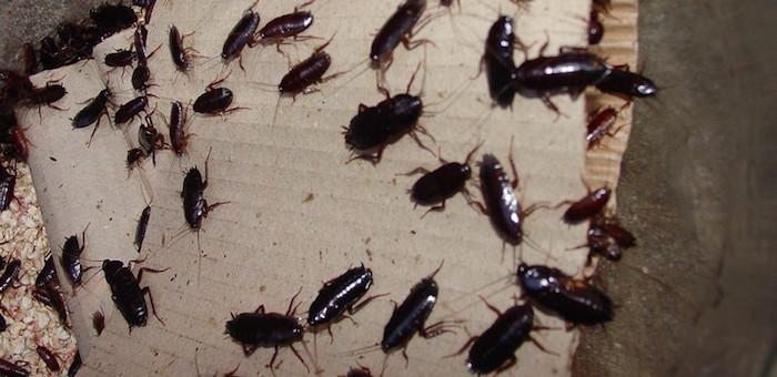 Пенсионерке помогли очистить квартиру от тараканов