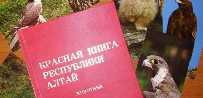 Третье издание Красной книги Республики Алтай выйдет в Год экологии