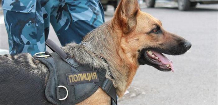 Служебная собака помогла задержать вора