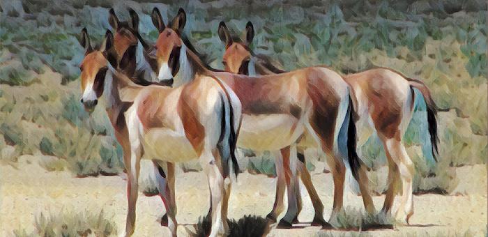 30 тыс. лет назад на Алтае обитали зебро-ослоподобные существа