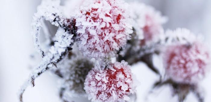 Морозы вернутся на Алтай к выходным