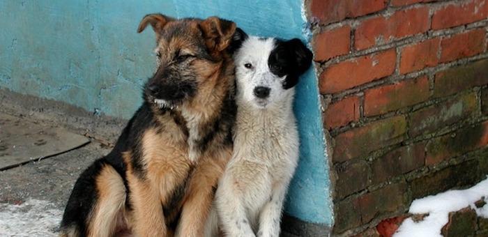 На Алтае растет число безнадзорных собак и кошек