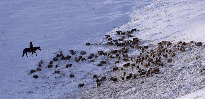 Выпас скота запретят в пятикилометровой зоне возле границы