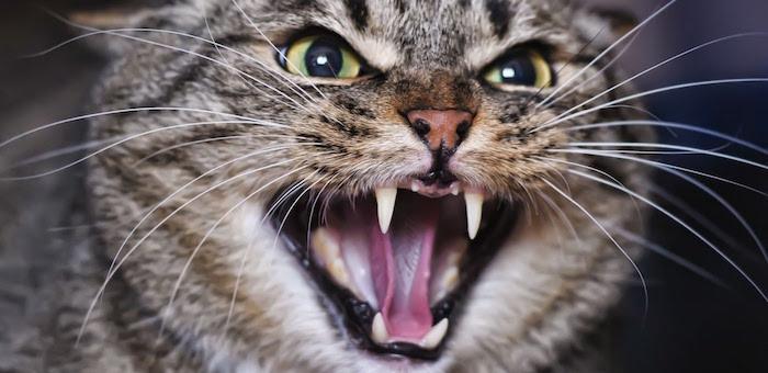 В Горно-Алтайске у кошки на улице Дружбы выявлено бешенство
