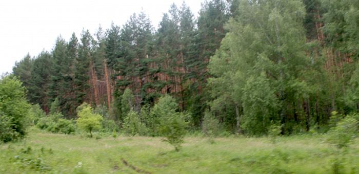 Сосновому бору в окрестностях Горно-Алтайска хотят придать статус «зеленого щита»