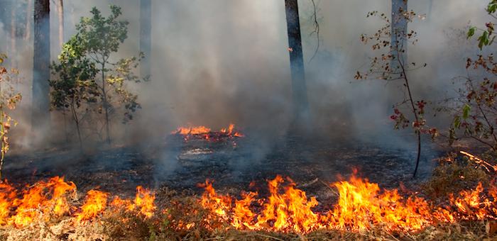 На Алтае будут поощрять поселения, в которых не допущено лесных пожаров