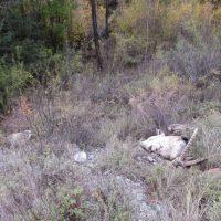 Стали известны новые подробности о случае браконьерства в Шавлинском заказнике