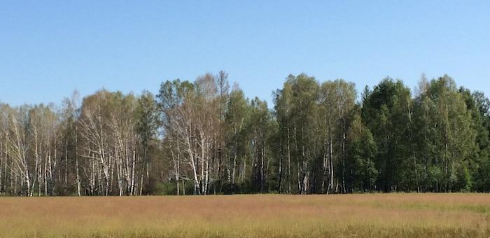 Площадь лесов, пораженных непарным шелкопрядом, удвоилась