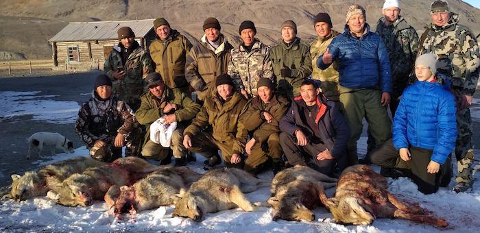 Более 500 волков застрелили в этом году на Алтае