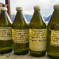 Нефтепродуктов в водах Телецкого озера практически нет