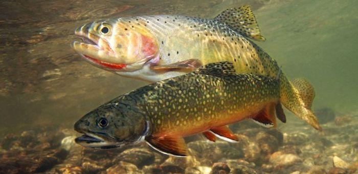 В Минсельхозе обсудили проблемы рыбохозяйственного комплекса