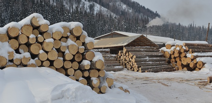 На Алтае реформируют систему управления лесным хозяйством