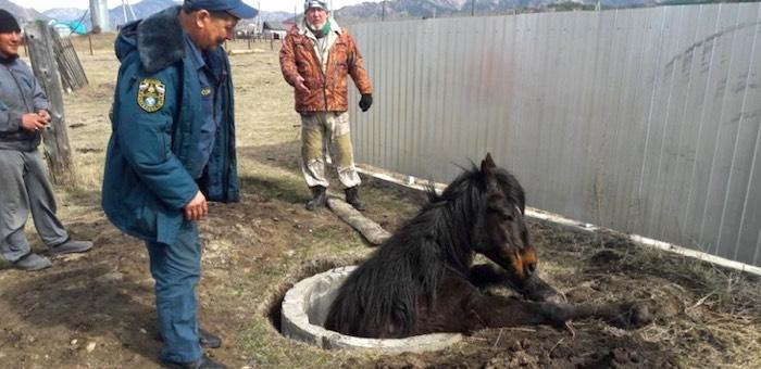 На Алтае пожарные спасли провалившуюся в колодец лошадь