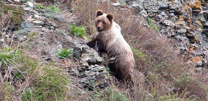 Медведь и маральник: уникальные фотоснимки из Алтайского заповедника