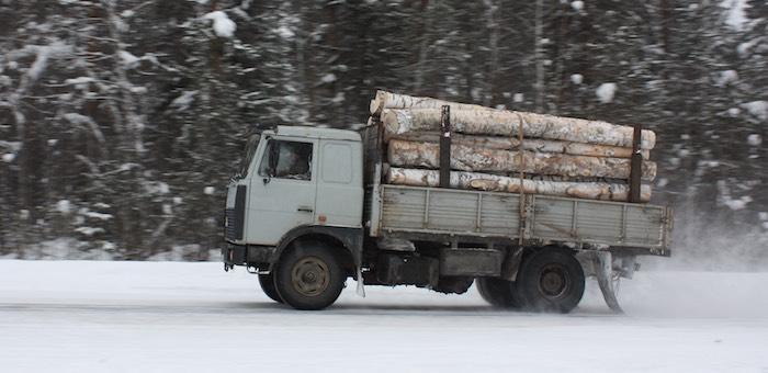Ущерб от вырубки леса на землях сельхозназначения превысил 2,5 млрд рублей
