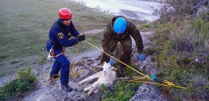 Со скалы около Малого Яломана спасатели сняли пять коз