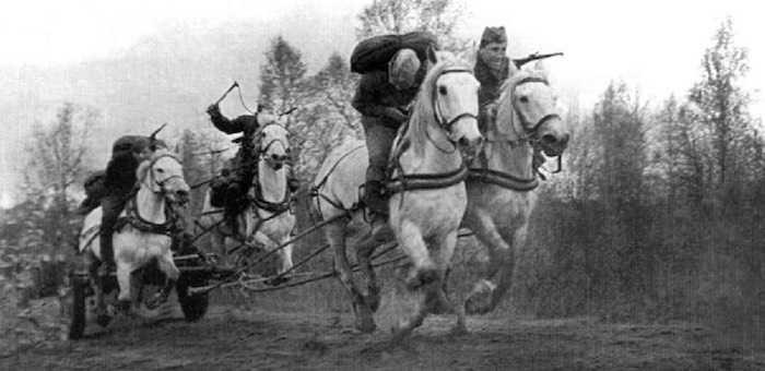 «Поставил на ноги» сотни лошадей