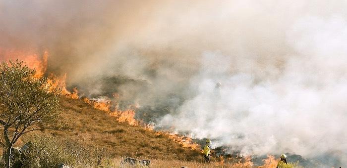 Родителей подростков, устроивших пожар на Тугае, привлекут к ответственности