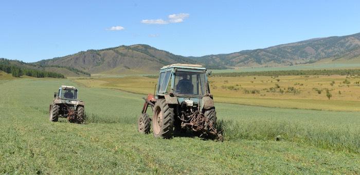 Заготовка кормов началась в Горном Алтае