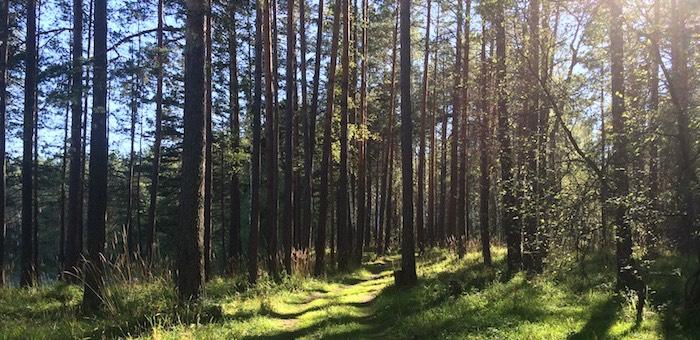 В Турочакском районе создали особо охраняемую природную территорию