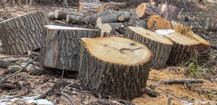 Фирмы, рубившие лес на землях сельхозназначения в Турочакском районе, оштрафованы