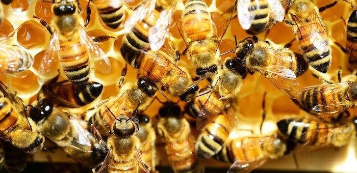 Фестиваль меда пройдет в Горно-Алтайске