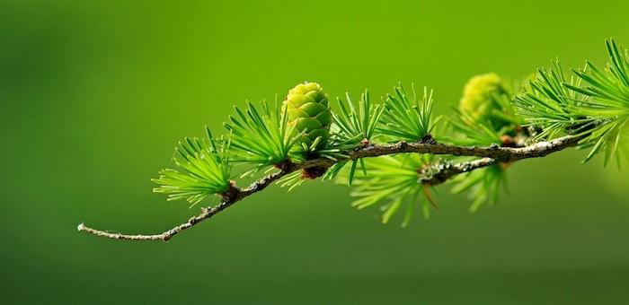 Госдума приняла закон, связанный с лесовосстановлением